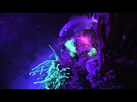 Discover Ultraviolet: See Corals &…