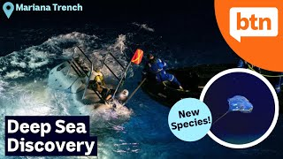 New Deep Sea Species Found: Exploring Mariana Trench – Today's Biggest News