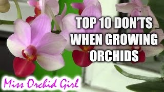 Top 10 DON'Ts when Growing Orchids - tips for orchid beginners