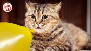KITTENs 😻 CATs Vs. Balloons 🐱🎈 Funny and Cute Cats Playing Balloons Compilation 2019