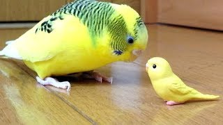 Forget CATS & DOGS! BIRDS are WAY FUNNIER! - It's TIME to LAUGH!