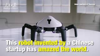 Highly maneuverable and programmable Chinese six legged robot amazes the world