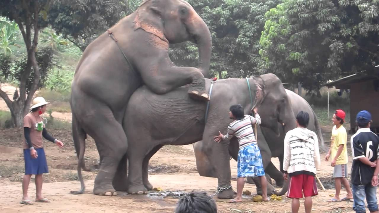 slon sеx
