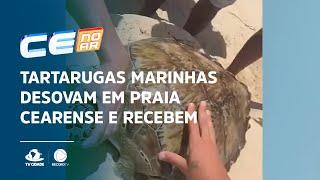 Tartarugas marinhas desovam em praia cearense e recebem proteção especial