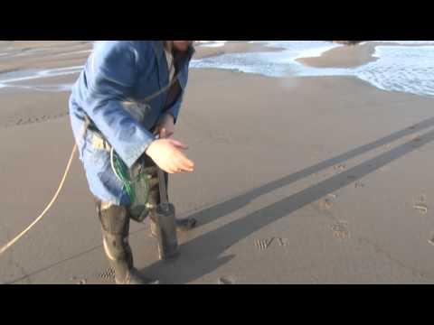 Човеков ќе ви покаже како се копаат школки од брегот на морето