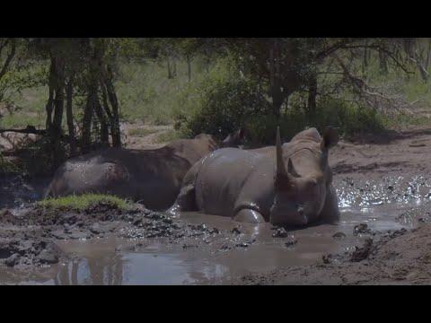 South Africa Scuba Safari - Trip Report…