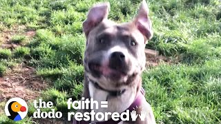 Foster Pittie Who Hid For Weeks Plays So Hard Now | The Dodo Faith = Restored