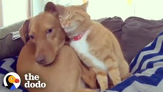 Hidden Camera Catches Cat Comforting Anxious Dog While Family's Away | The Dodo Odd Couples