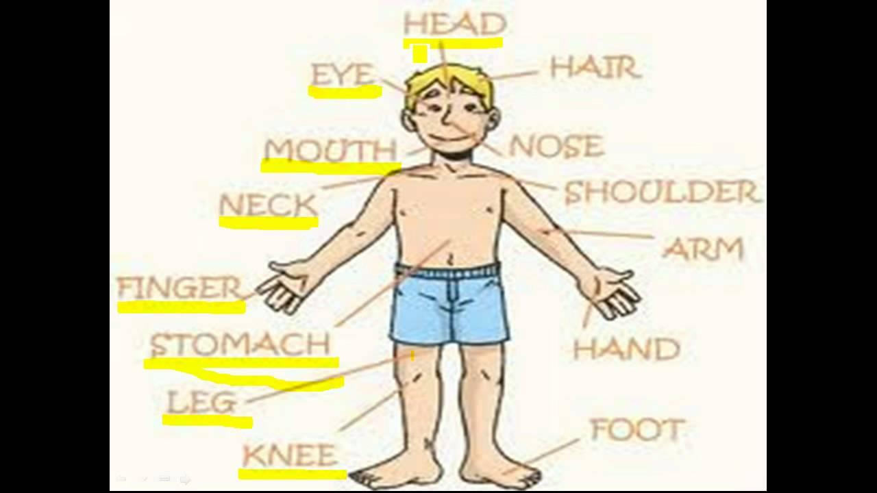 Inglês Partes Do Corpo