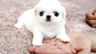 Best Of Cute Baby Animal Videos Compilation 2016
