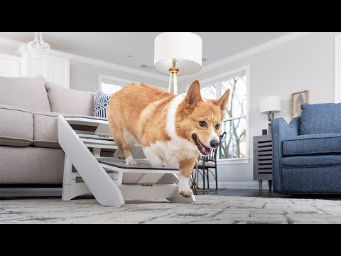 The PetSafe® CozyUp™ Steps & Ramp Combo adjusts from 16–20 inches in height and its heavy-duty carpet cover keeps pets from slipping or tripping.