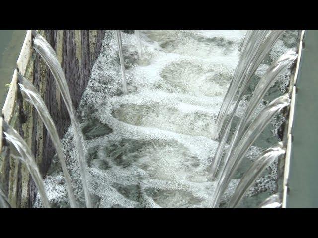 鳳山汙水廠趁雨偷排?水利局:依法繞流