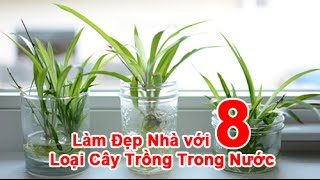 Làm Đẹp Nhà với 8 Loại Cây Trồng Trong Nước
