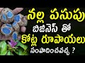 నల్ల పసుపు ( Kali Haldi,Curcuma Caesia ) Farming Business Idea Shocking Real facts of Black Turmeric
