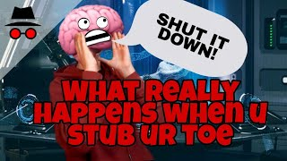 What really happens when you stub your toe | Sam The Sparrow