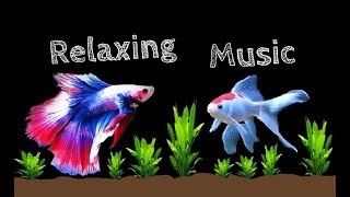 Relaxing Calming Peaceful Sleep Music Background Music With Live Tropical Fish Video 2