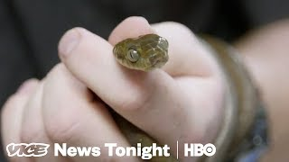 2 Million Snakes Have Taken Over The Island Of Guam (HBO)