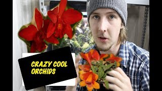Plant haul  || SOOS orchid show and sale --- SO MUCH GOOD STUFF!!!