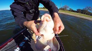 Lunkerstv videos downlossless for Lunkerstv fishing rods