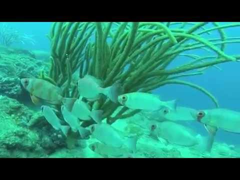 Killing lionfish chapter 24 11 21 2014