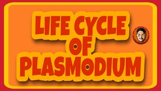 LIFE CYCLE OF PLASMODIUM class 12 cbse biology..