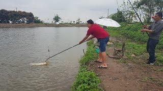 Câu cá hồ được toàn cá trắm chép bự - Grass carp fishing