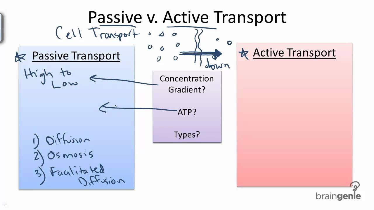2.2 Passive vs. Active Transport - YouTube