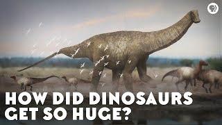 How Did Dinosaurs Get So Huge?