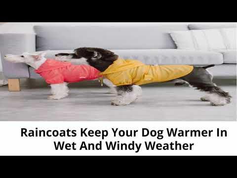 Dog Rain Coats