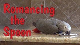 Einstein Parrot, romancing the spoon