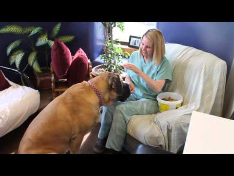 Desensitizing/counter-conditioning fearful dog at veterinary hospital