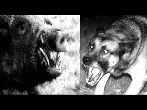Tropero Vallejos: Mi viejo perro cacique