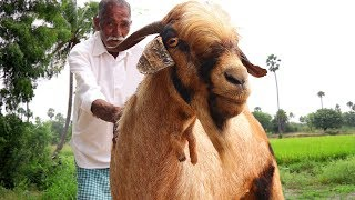 Traditional Full Goat Biryani | Full Goat Recipe By Our Grandpa | Giant Lamb Biryani Grandpa Style