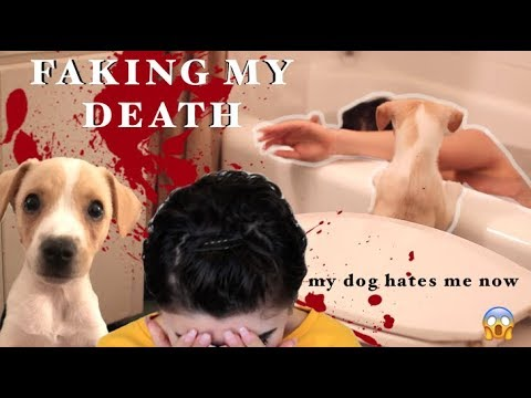 PRANKING MY PUPPY (part 1)- My Dog Reacts to me DYING!