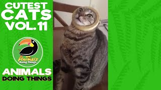 Cutest Cats Compilation Vol. 11 | Funniest Animals Doing Things