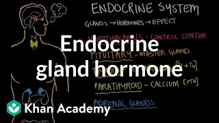 Endocrine gland hormone review | Endocrine system physiology | NCLEX-RN | Khan Academy