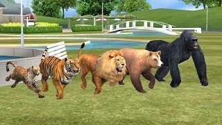 Learn Lion Animals Finger Family song for kids,nursery rhymes,Gorilla,tiger,bear,arcus n media Kids