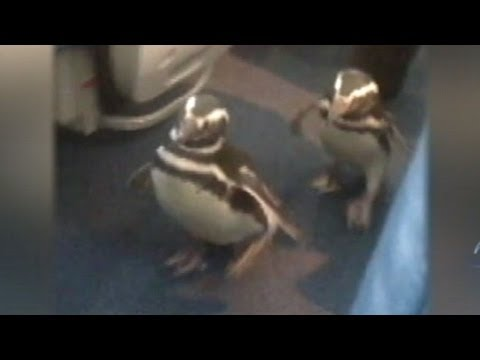 planets funniest animals youtube - photo #39