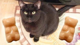 Gummy Bear Treats For Cats - Easy Homemade Cat Treat Recipe - Halloween