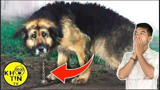 10 năm trời chú chó này bị nhốt và điều đáng sợ gì đã diễn ra?
