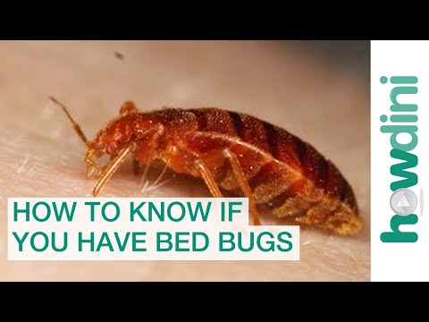 Youtube How To Find Bed Bugs Get Rid Bees Under Shed