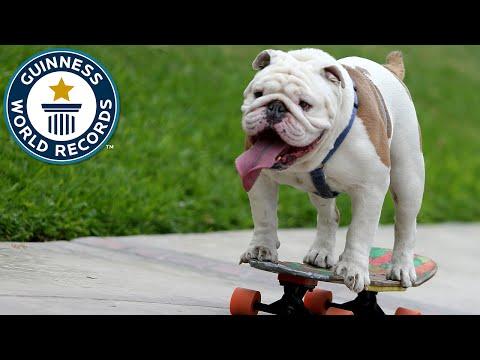 Pas oborio rekord u vožnji skateboardinga