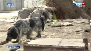 Омичка подозревается в убийстве собаки