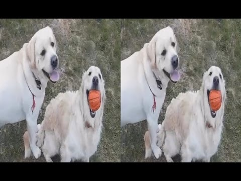 Dog DUNE ( Part 5 of 5 ) ! Meeting during RAIN ! 3D VIDEO
