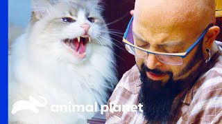 Cat Attacks People When They Cry | My Cat From Hell