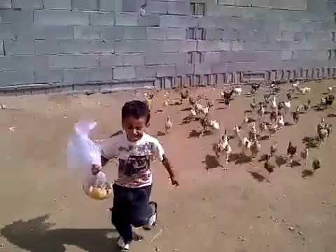 Niño Corriendo perseguido por pollos