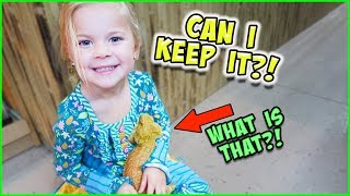 WE GET A REAL BEARDED DRAGON!!