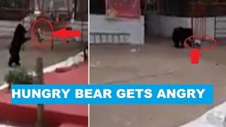 Bear search food in empty trash at Chhattisgarh temple, ba..