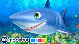 Shark Song | Little Baby Bum Junior | Kids Songs | LBB Junior | Songs for Kids LONG