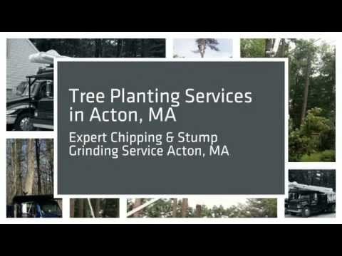 Tree Removal & Pruning 01720